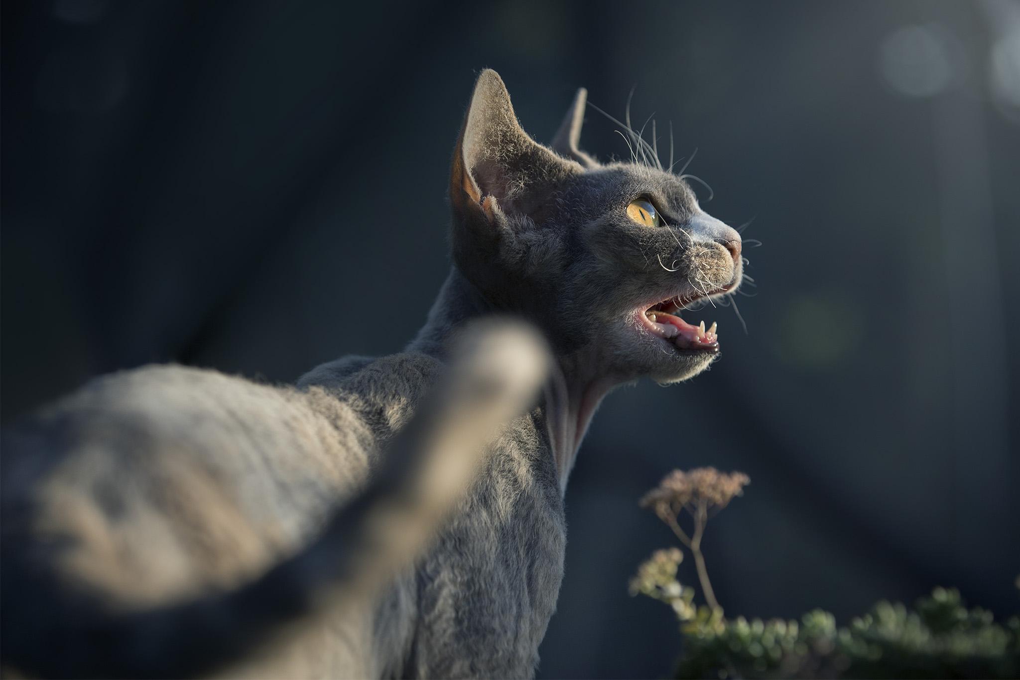 Chat qui miaule dans un jardin naturopathie pour animaux