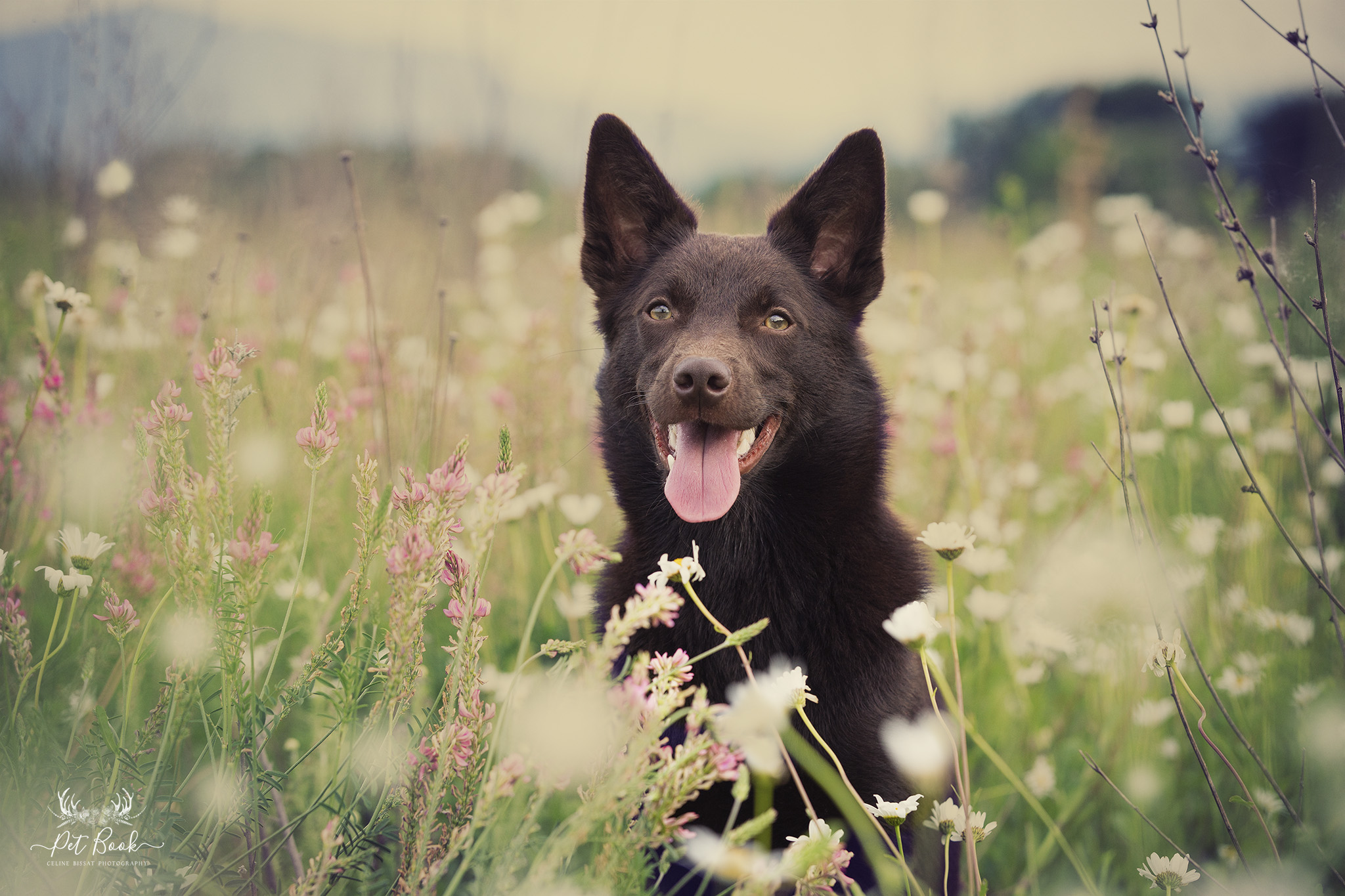 Naturopathie pour animaux