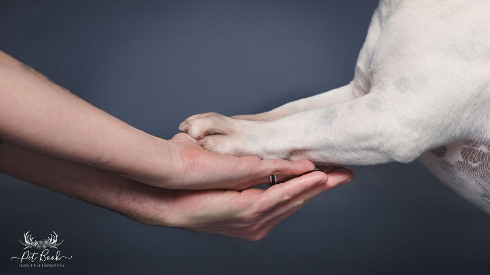 Communication animale et soins naturels