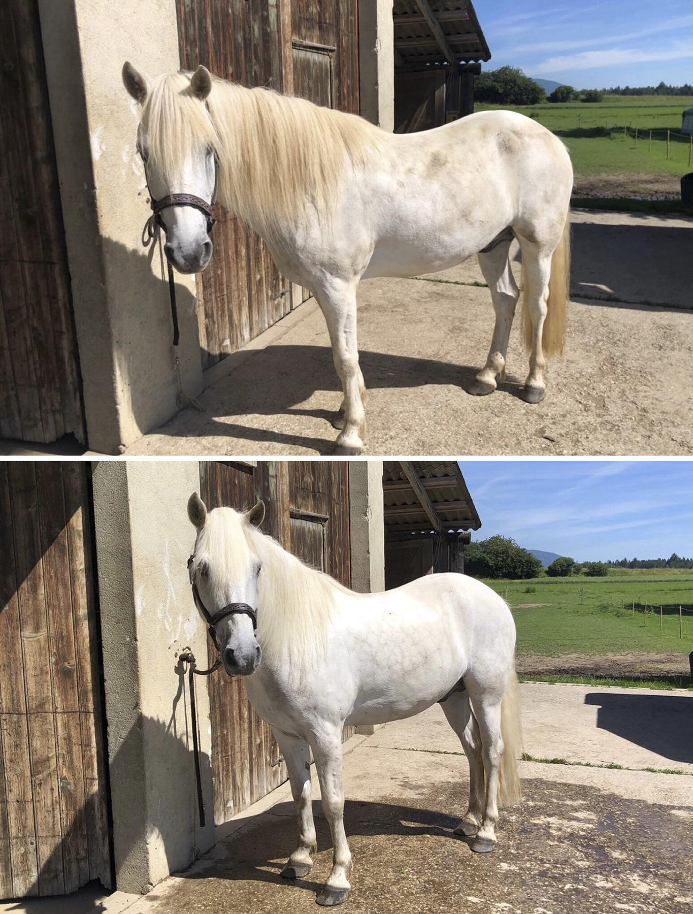 Shampoing naturel cheval chevaux