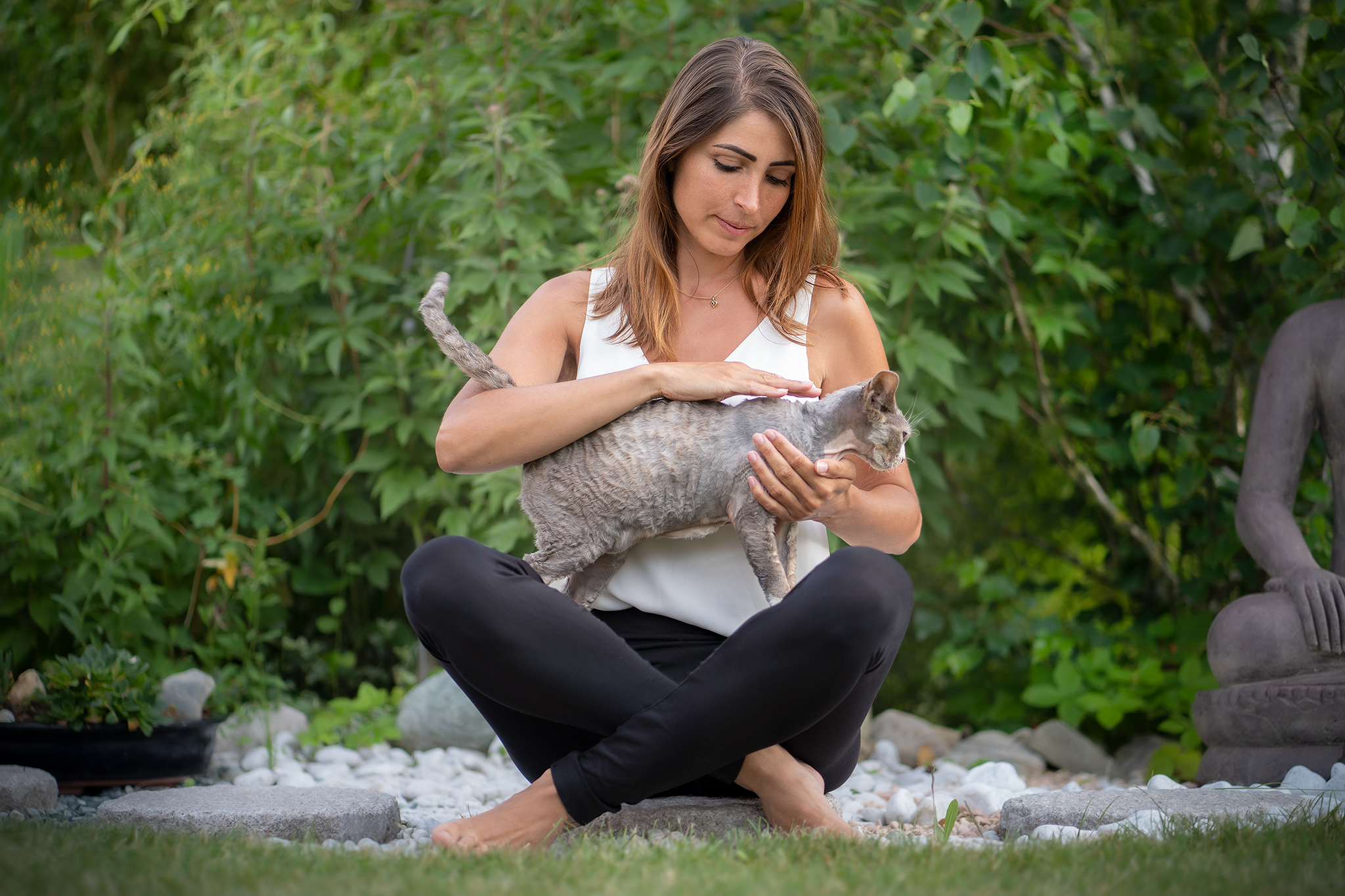 reiki soin animaux chat