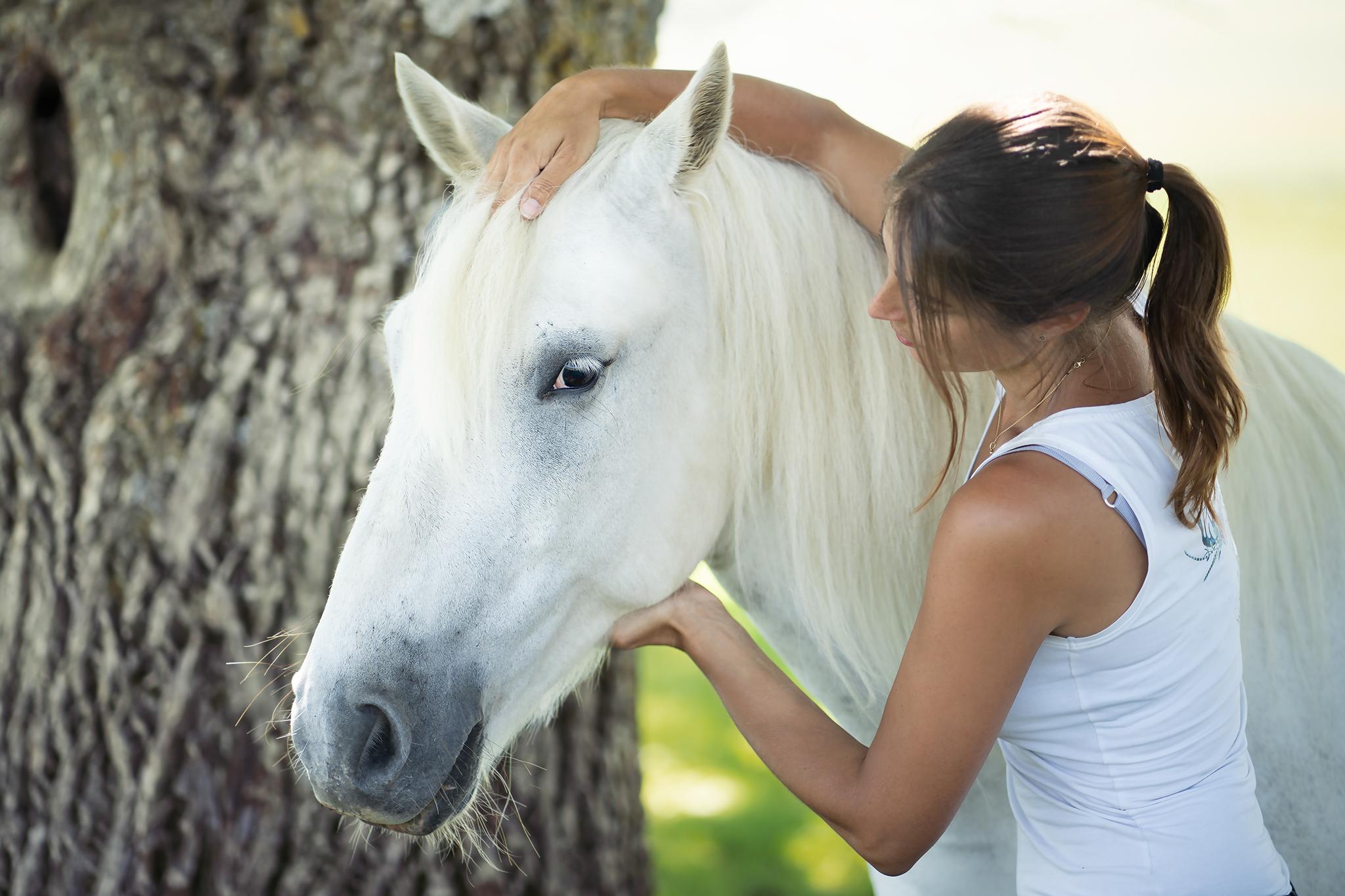 Soin énergétique reiki animaux cheval