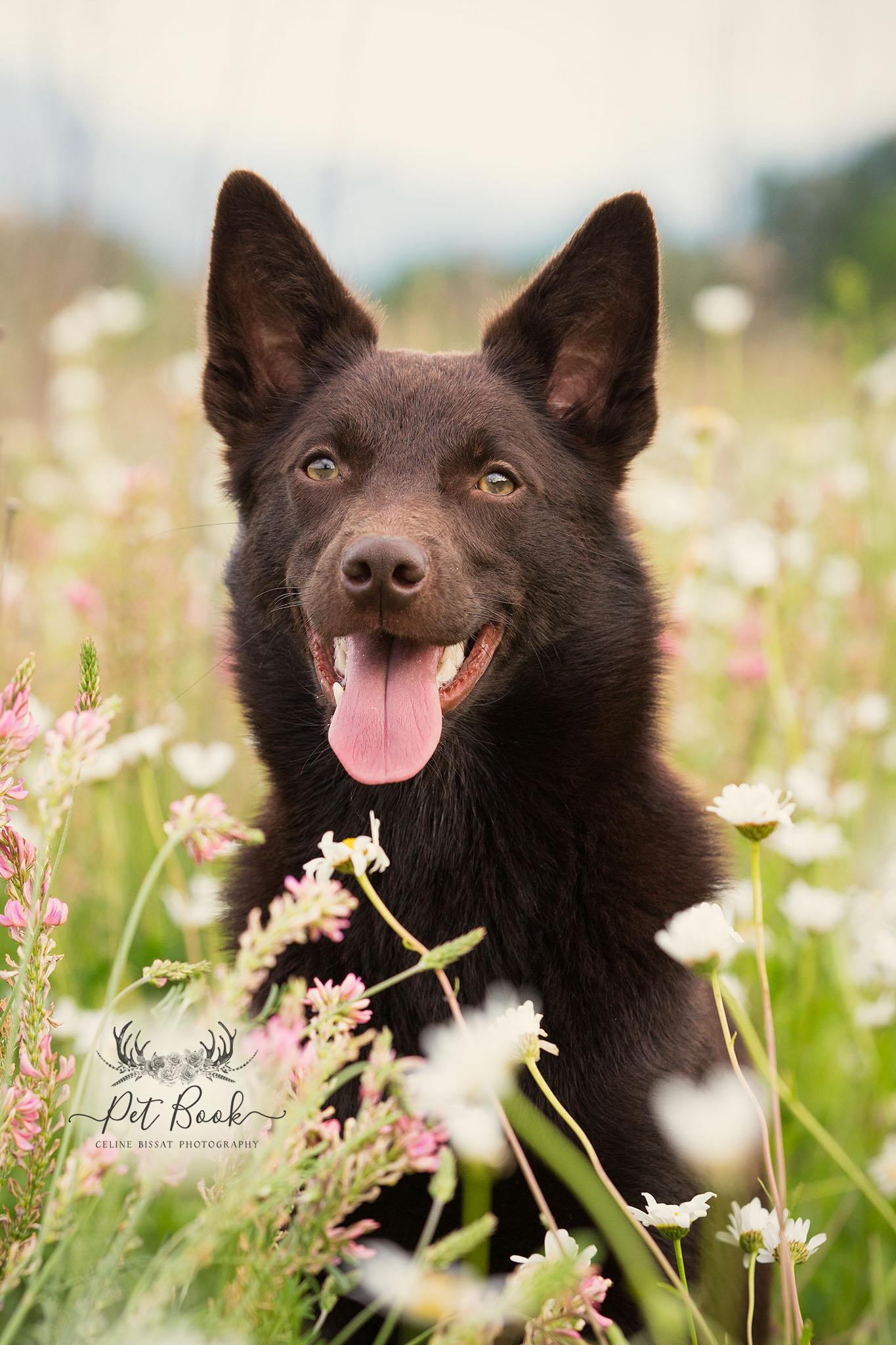 vacances chien animaux de compagnie