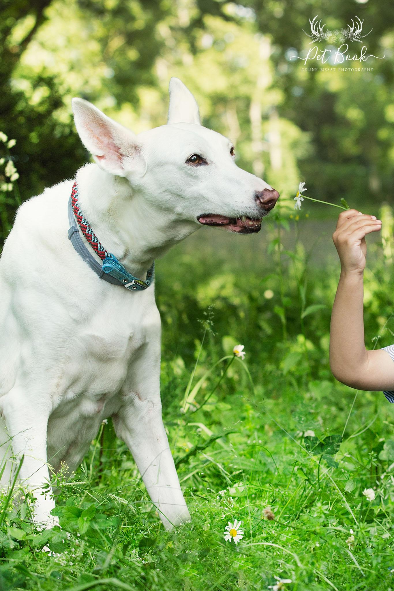 Administration fleurs de bach chien animaux