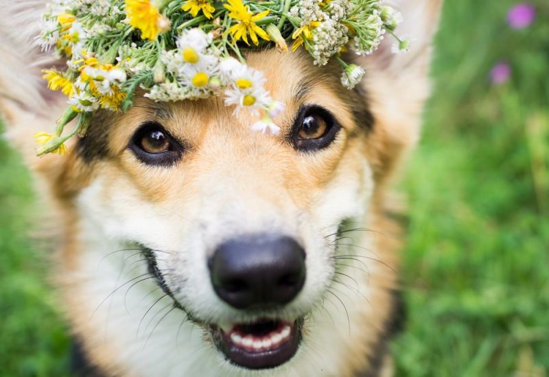 Administrer fleurs de bach animaux animal